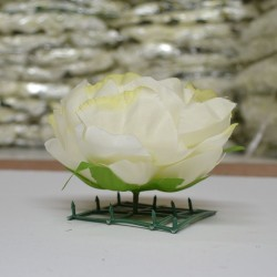 Light Green Peony Heads Closed - Pack of 10