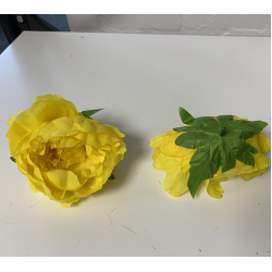 Yellow Peony Heads Closed - Pack of 10