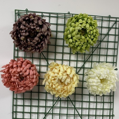 Chrysanthemum Heads